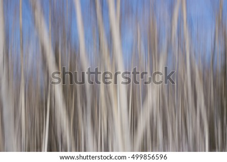 Blurry defocused aspen trees forest winter landscape white and blue abstract background texture pattern