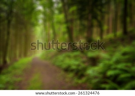 Blurry landscape useful as background - summer forest - stock photo