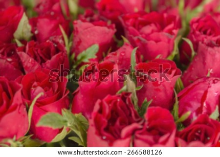 blurry of red rose flower for background