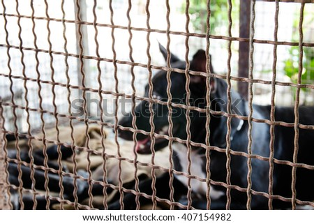 Blurry portrait sad dog in cage,Animal cruelty concept - stock photo