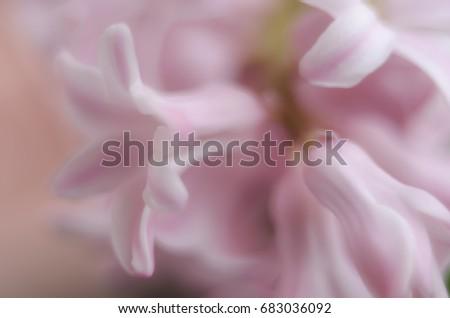 Blurry soft pink flowers background stock photo edit now shutterstock blurry soft pink flowers background mightylinksfo