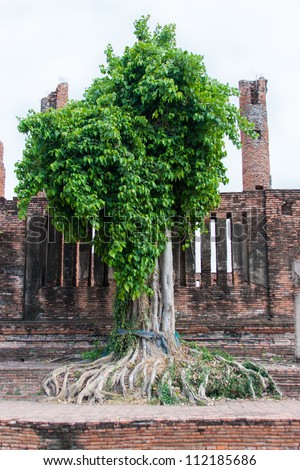 Bo Tree at Temple, Ayutthaya, Thailand - stock photo