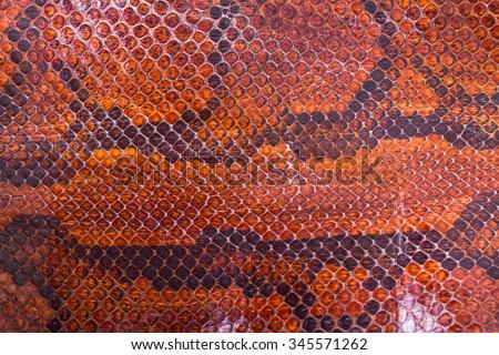 Boa or Python snake pattern skin - stock photo
