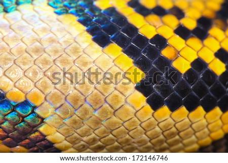 boa snake skin and scales pattern macro - stock photo