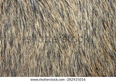 Boar fur texture. - stock photo