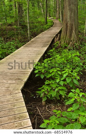 Boardwalk crossing a swamp in a Maryland State Park - stock photo