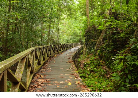 Boardwalk in dense rainforest - stock photo