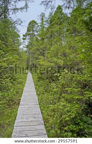 Boardwalk in the Woods - stock photo