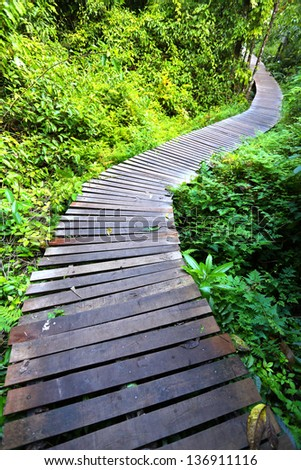 Boardwalk leading into tropical forest - stock photo