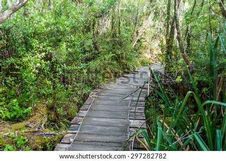 Boardwalk on a trekking trail in a forest in National Park Chiloe, Chile - stock photo