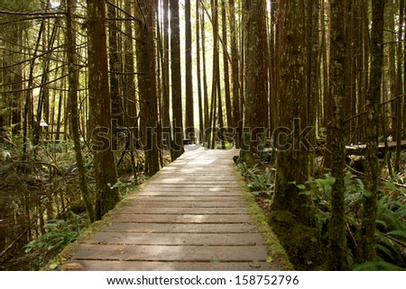 Boardwalk through the mysterious cold rain forest on Vancouver Island, Canada - stock photo