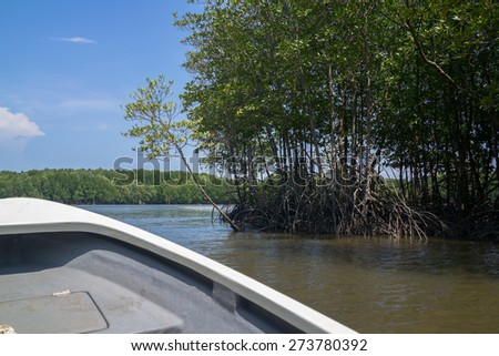 Boat running along the shore of mangrove forest. - stock photo