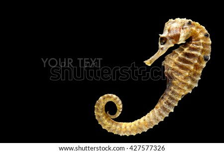 body and texture of dry seahorse isolate from black background with space for text