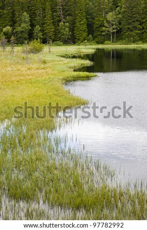 Bog at the forest lake in the wilderness - stock photo