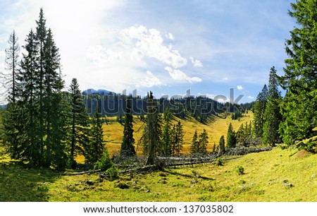 Bog with mountain forest in the Blue Mountains, Tyrol, Austria - stock photo