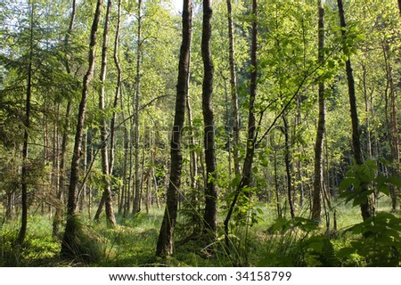 boggy forest - stock photo