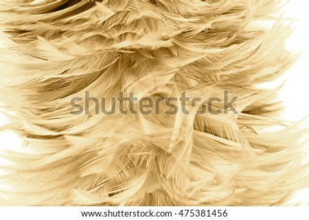 Bohemian boho style vintage color trends ,Chicken feather texture background,Interior soft luxury heaven angels,Modern image used for fashion design living room,office and others