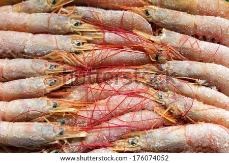 Boiled frozen shrimp arranged in neat rows. - stock photo
