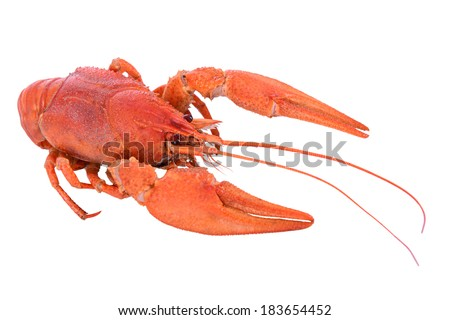 Boiled red crawfish isolated on a white background - stock photo