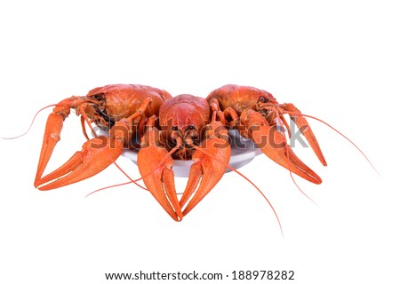Boiled red crawfishes in plate isolated on a white background - stock photo