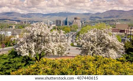 Árboles con flores de primavera divididos por tipo: Dogwood, Cherry, Plum