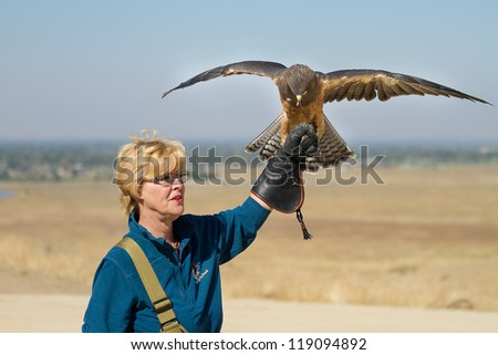 BOISE, IDAHO - OCTOBER 7 : Unidentified handler at World Center for the Birds of Prey holds a Swainson Hawk on October 7, 2012. - stock photo