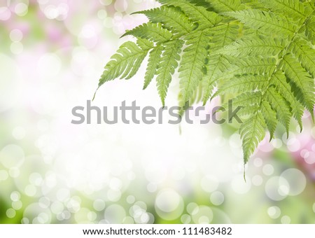 Bokeh background with green leafs