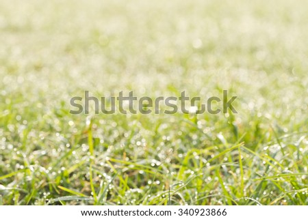 Bokeh blurred grass with dew of the sun - stock photo