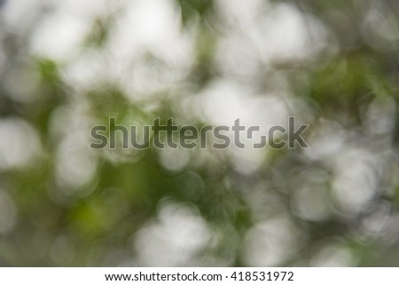 Bokeh Effect Background of Trees and Trees Leaves creating Light Blurt Effect for Abstract mood and tone.
