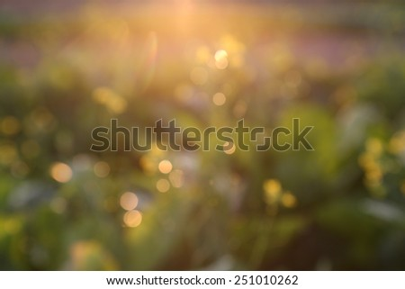 Bokeh golden evening on the summer meadow, natural landscape - stock photo