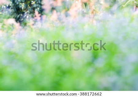 Bokeh light background of meadow in outdoor nature,blur bokeh abstract,motion of grass - stock photo