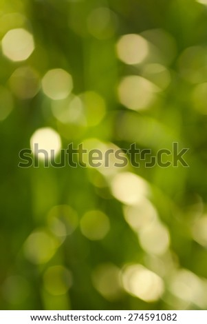 Bokeh Nature background.  abstract green background from tree. Defocused lights from tree and leaves. Vertical image - stock photo