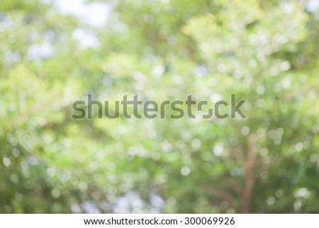 bokeh of tree background - stock photo