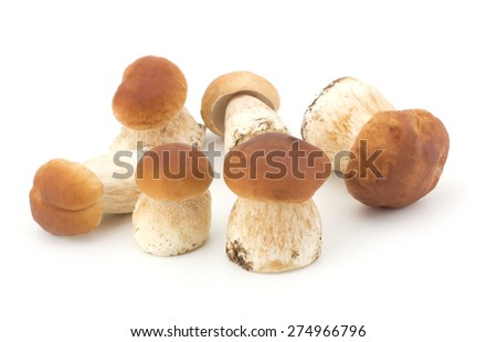 Boletus edulis mushroom isolated on white background close up - stock photo
