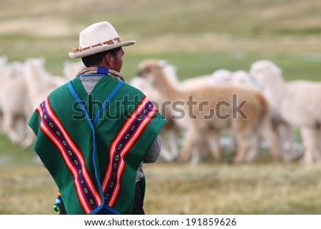 Bolivian herdsman - stock photo