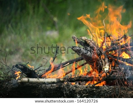 bonfire, campfire in the summer forest - stock photo