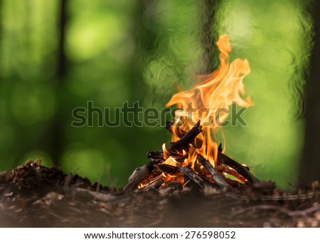 Bonfire in spring forest, close-up. - stock photo