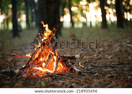 Bonfire in the forest - stock photo