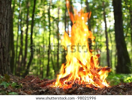 Bonfire in the forest. - stock photo