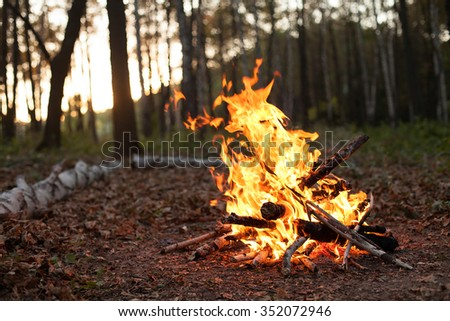 Bonfire in the forest in the evening