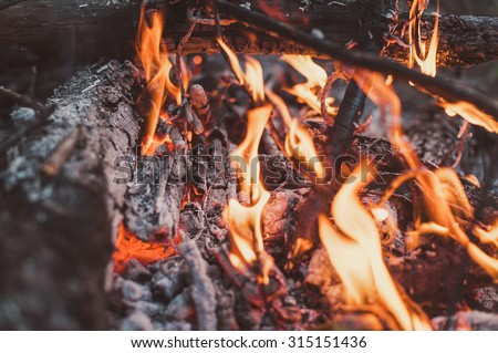 bonfire in the forest. the sunny day. - stock photo