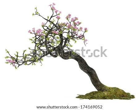Bonsai flower plant tree isolated - stock photo