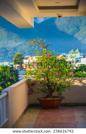 bonsai in a pot on the terrace - stock photo
