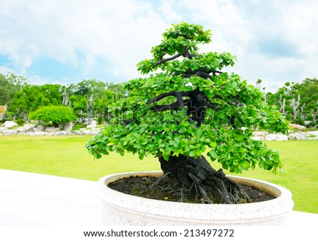 Bonsai in garden - stock photo