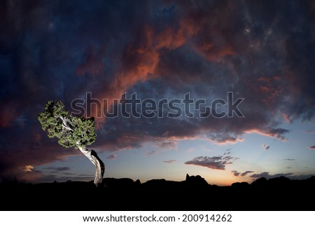 Bonsai Juniper at sunset, Joshua Tree National Park - stock photo
