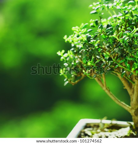 bonsai on green grass background - stock photo