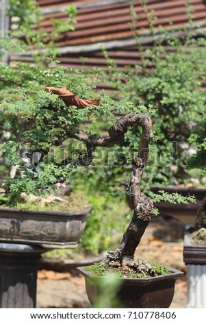 bonsai plants in bonsai gardens