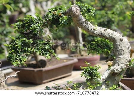 Bonsai Plants In Bonsai Gardens