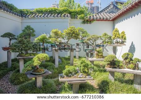 Bonsai Tree Garden At Chinese Garden In Sydney, Australia/Bonsai Garden /SYDNEY,