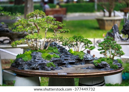 bonsai tree in garden